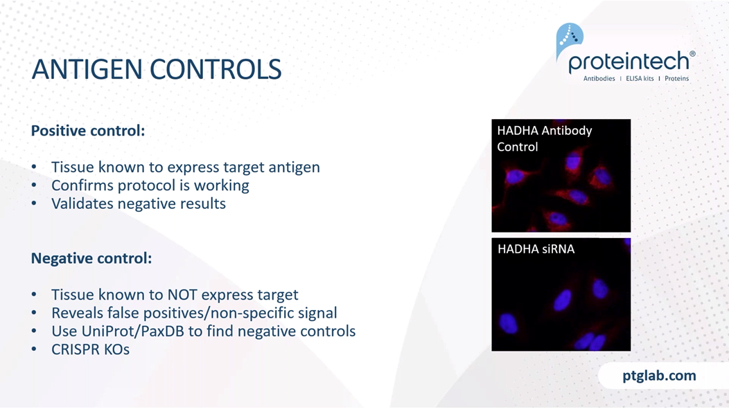 positive and negative antigen controls