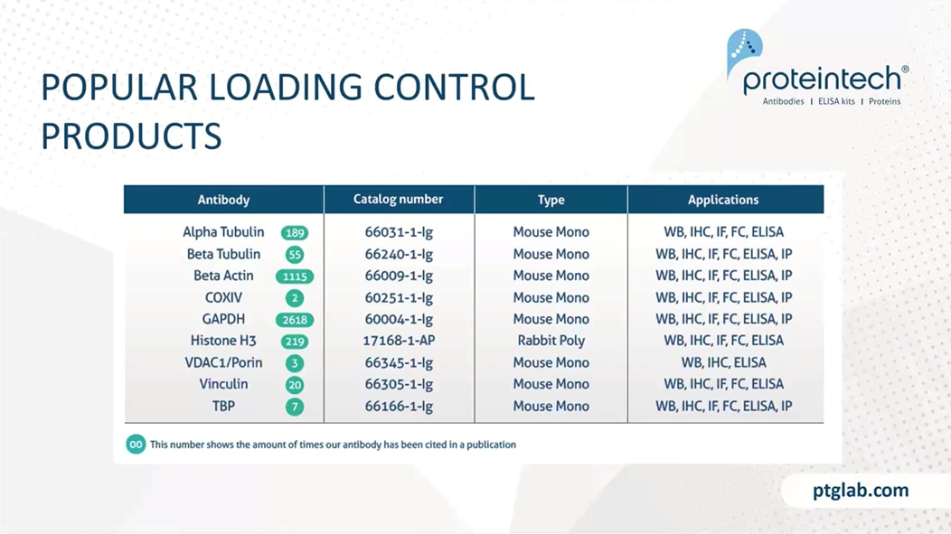 List of popular loading control antibodies from Proteintech