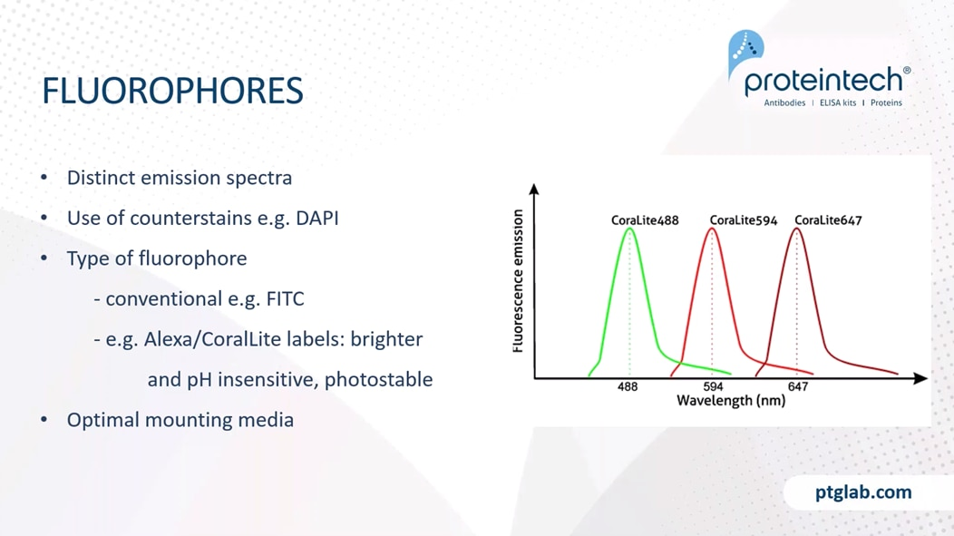 When designing your staining strategy, it is really important to consider your fluorophores