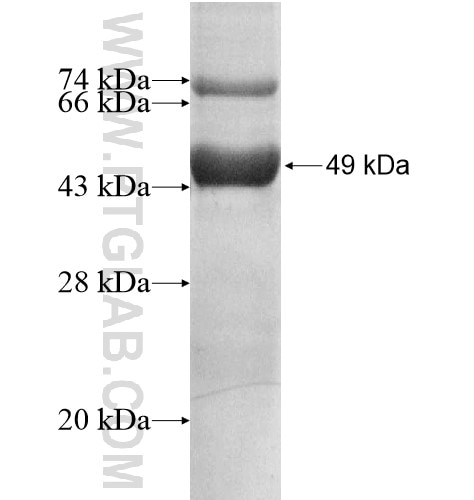 ABHD14A fusion protein Ag13744 SDS-PAGE