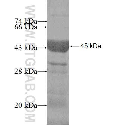 ALDOC fusion protein Ag6779 SDS-PAGE
