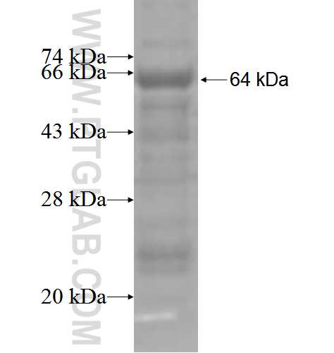 CETP fusion protein Ag3923 SDS-PAGE