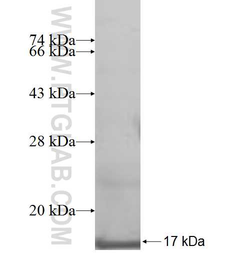 CXCL2 fusion protein Ag9425 SDS-PAGE