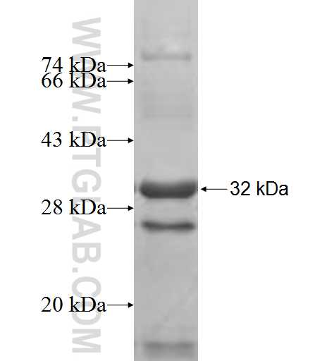 IMPA1 fusion protein Ag9632 SDS-PAGE